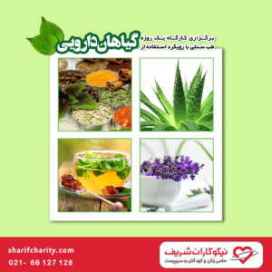 کارگاه طب سنتی با استفاده از گیاهان دارویی